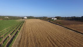 Wheat and wine fields in the countryside from Portugal stock video footage