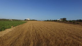 Wheat and wine fields in the countryside from Portugal stock video