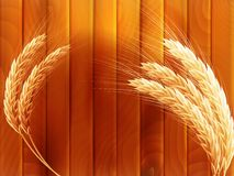 Wheat on wooden autumn background. EPS 10. Vector file included Royalty Free Stock Photography