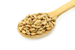 Wheat in wooden spoon Stock Photos