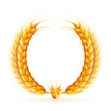 Wheat Wreath. Vector realistic wheat wreath design Stock Photos