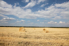 Wheat yellow field with wheat rolls. For background Stock Photography
