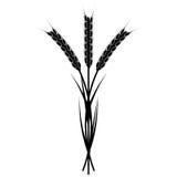 Wheaten Ear Stock Photo