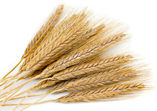 Wheaten ears. Wheat �ars isolated on a white background Royalty Free Stock Images