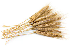 Wheaten ears. Wheat �ars isolated on a white background Royalty Free Stock Photo