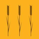 The Wheaten Ears Stock Image