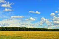 wheaten fält Royaltyfri Bild