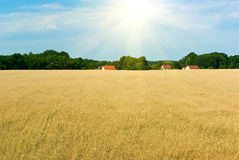 Wheaten Feld Lizenzfreies Stockbild