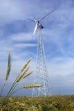 Wheaten Feld mit einer Windmühle Stockbilder