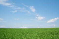 Free Wheaten Field Stock Photography - 806072