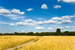 Wheaten field Royalty Free Stock Image