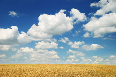 Free Wheaten Field And The Sky Royalty Free Stock Images - 16026709