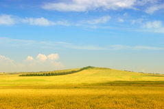 Wheaten field Stock Images