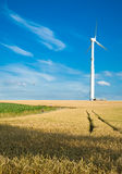 Wheaten field with a mill. Wheaten field with a mill in a clear flying weather Stock Photo
