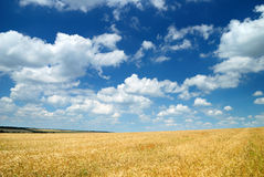 Wheaten field and the sky Stock Photos
