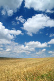 Wheaten field and the sky Stock Images
