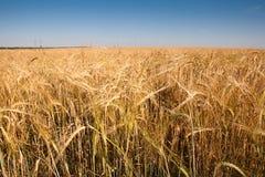 Wheaten gebied Stock Fotografie