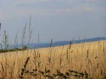 Wheatfiel2 стоковая фотография rf