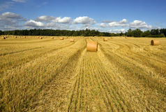 Wheatfield Stock Image