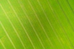 Wheatfield Стоковые Изображения