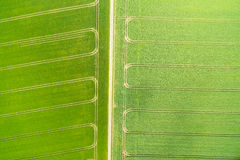 Wheatfield стоковые фотографии rf