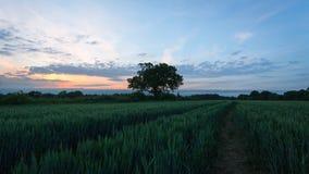 Wheatfield Images libres de droits