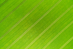 Wheatfield Stock Photography