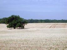 Wheatfield de Oklahoma imagens de stock royalty free