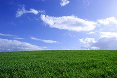 Wheatfield e céu azul fotos de stock royalty free