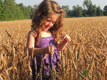 Wheatfield e uma maravilha de Childs Imagens de Stock