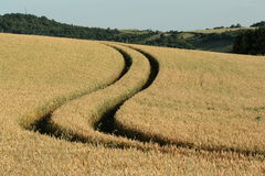 Wheatfield em France Fotografia de Stock Royalty Free