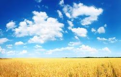 Wheatfield en blauwe hemel Royalty-vrije Stock Foto's