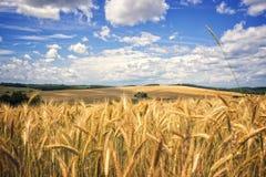 Wheatfield en blauwe hemel met wolken Royalty-vrije Stock Afbeelding