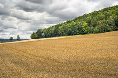 Wheatfield in Franconia Germany Stock Photos