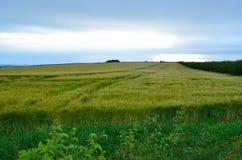 Wheatfield in Großbritannien Lizenzfreie Stockfotos