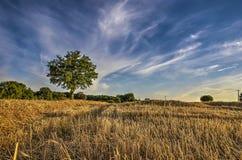 Wheatfield nach Ernte lizenzfreies stockbild