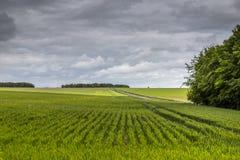 Wheatfield near Stonehenge on a cloudy day Stock Photos