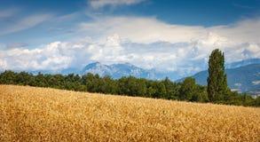 Wheatfield- och tusen dollarMorgon bergskedja i sommar i Hautes Alpes Frankrike Royaltyfria Bilder