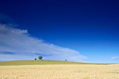 Wheatfield in platteland Macedonië Royalty-vrije Stock Afbeeldingen