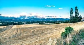 Wheatfield, pszeniczny pole w France Obrazy Royalty Free