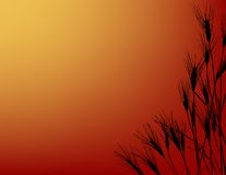 Wheatfield-Sonnenuntergang Stockbild