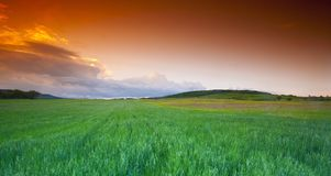 Wheatfield at sunset Royalty Free Stock Photography