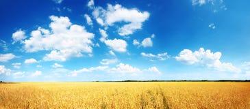 Wheatfield y cielo azul Imagenes de archivo