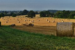 Wheatfieldoändlighet Arkivbilder