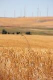 Wheatfields και Windfarms Στοκ Εικόνες