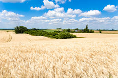 Wheatfields Στοκ Φωτογραφία