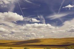 Wheatfields amarelos bonitos com as fugas do chem dos aviões e do t Fotografia de Stock Royalty Free