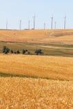 Wheatfields i Windfarms Fotografia Stock