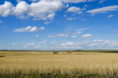 Wheatfields Stock Image