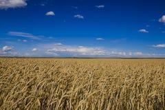 Wheatfields Stock Photography
